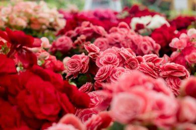 Амстердам достопримечательности, цветочный рынок в Амстердаме, Блюменмаркт, что посмотреть, куда сходить, Голландия