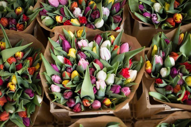 Едем в Амстердам в марте: погода, чем заняться, цены