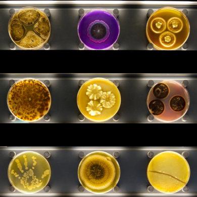 Музей микробов в Амстердаме