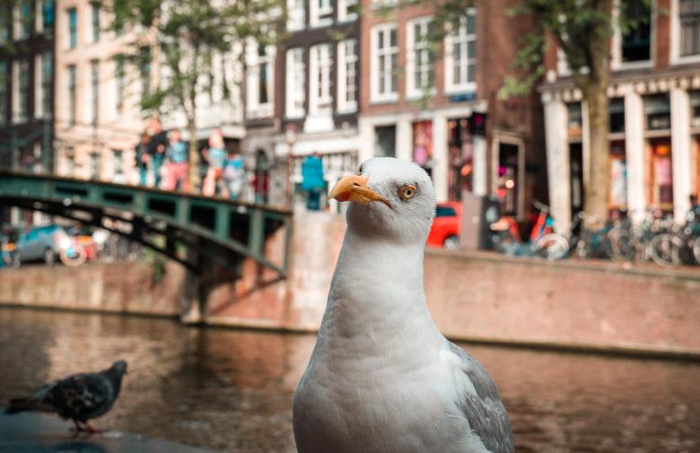 Амстердам в апреле: события, фестивали, погода